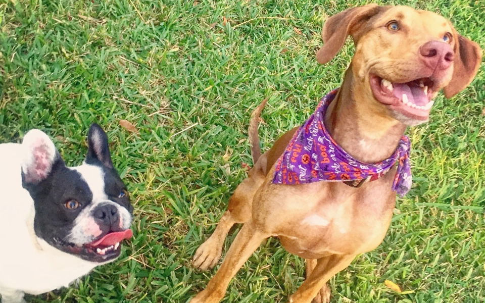 Pet friendly Homes for rent or to buy in Orlando FL